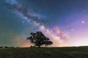 Big Oak Milky Way